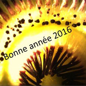 voeux 2016